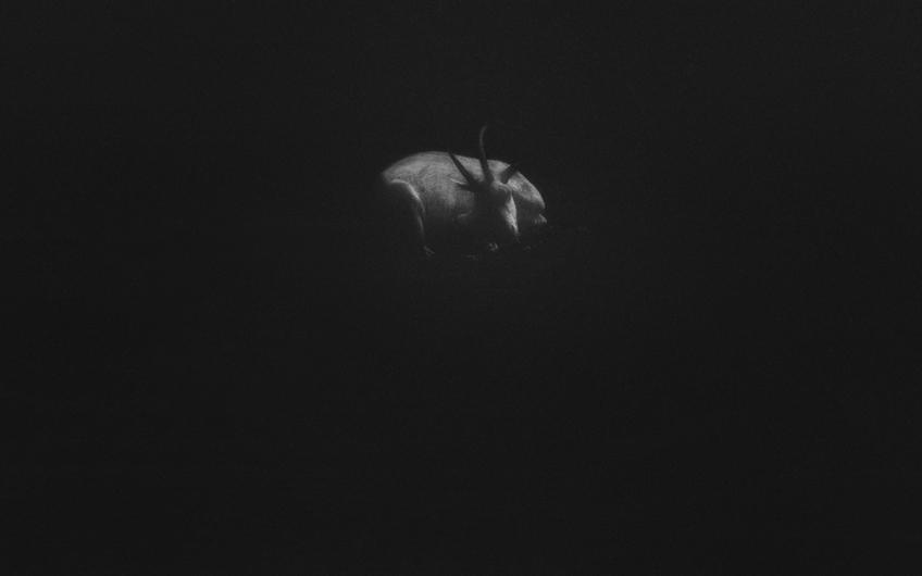 goat - 2013