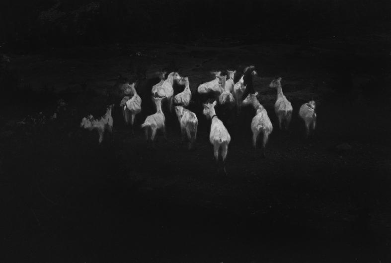 goats - 2013