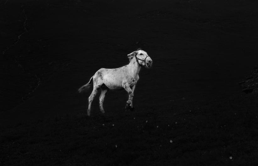 donkey - 2013