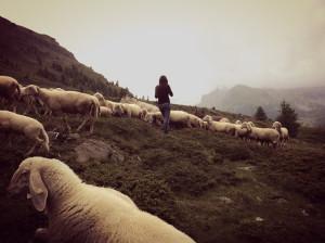 Ilaria Ferretti's reality&fantasy, with sheep.